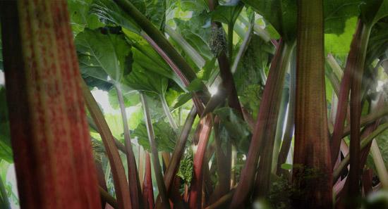 video still, 2007